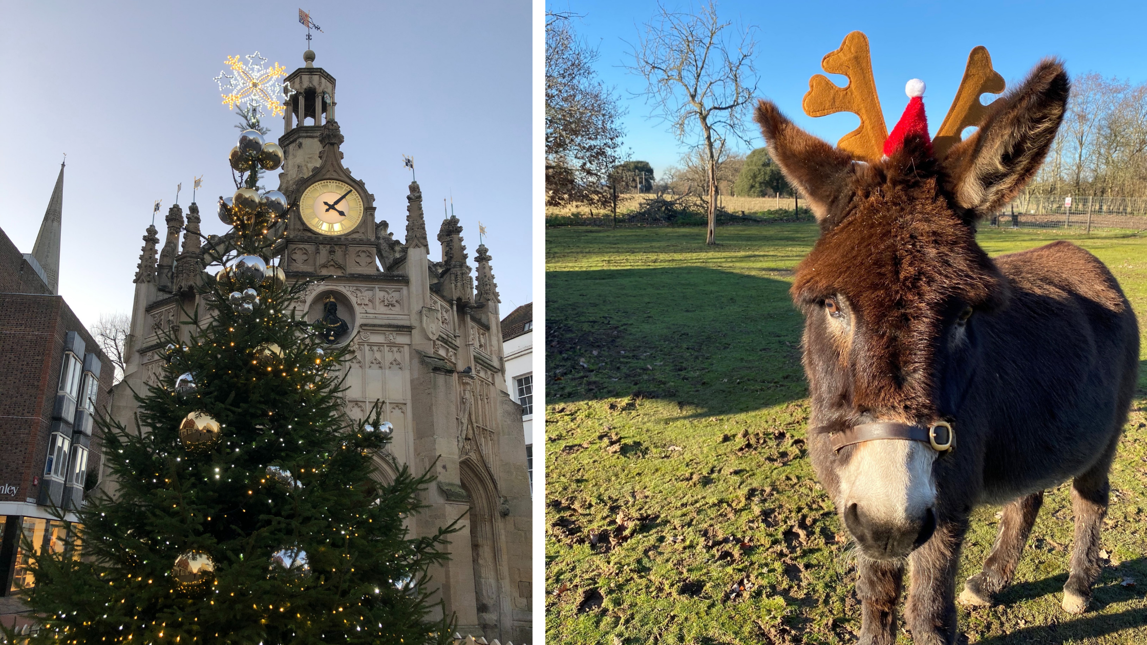 Rotary Clubs' of Chichester Tree of Goodwill and Aldingbourne Trust donkey